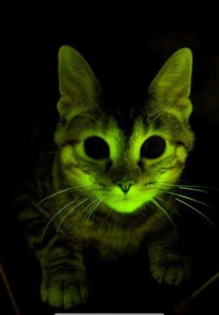gatto flourescente