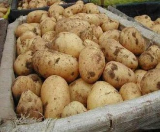 patata alto viterbese