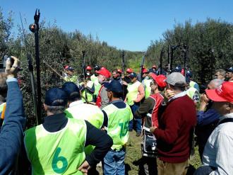 concorso potatura olivo
